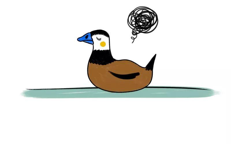 白头硬尾鸭手绘(想看完整的手绘故事吗?看创绿家今日第二条推送哦!